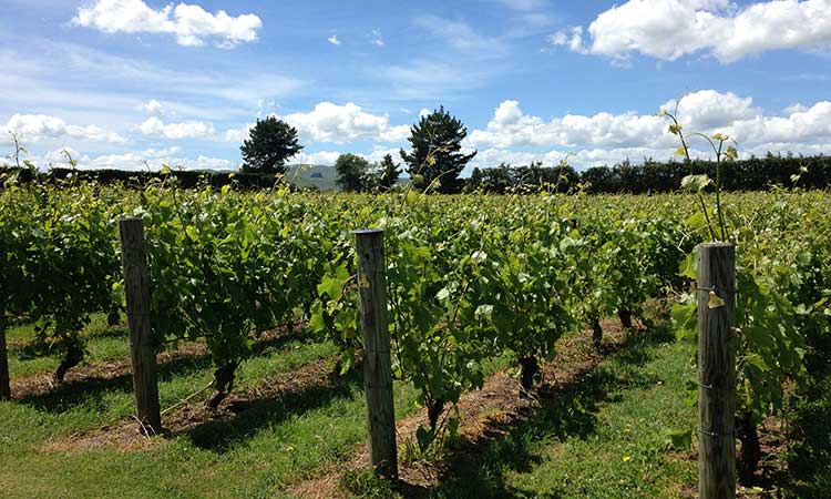 Martinborough Vineyard outside of Wellington